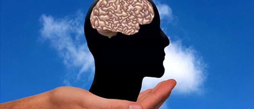 nutrifacil málaga cerebro