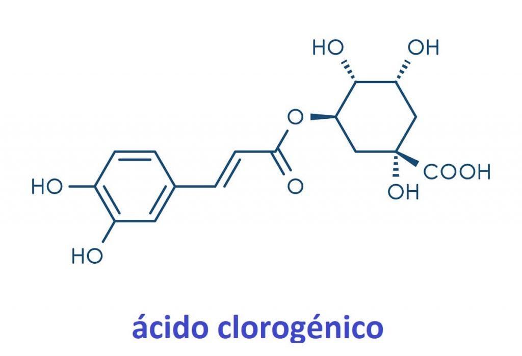 Ácido clorexigénico presente en el café verde