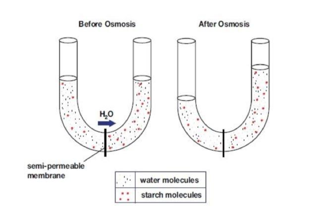 Proceso osmótico en la hidratación